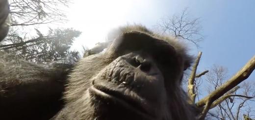 drone monkey burgers