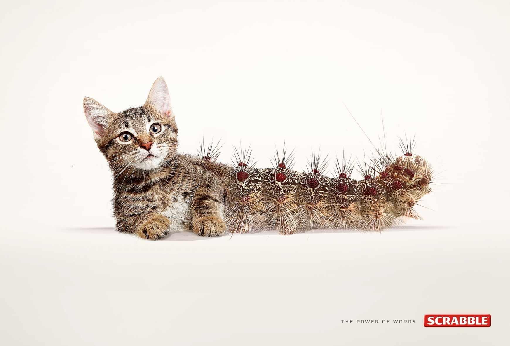 cat-erpillar